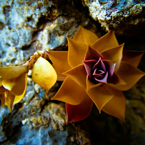 Utah Succulant by Mat Hockett - Nature Up Close Other plants