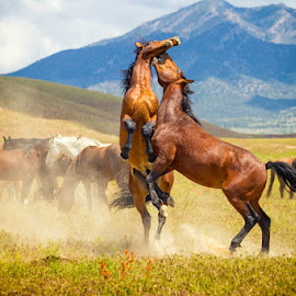 by Scott Stringham - Animals Horses ( canon, full frame, graphic, photograph, land, stringham, let there be light, landscape, digital, spring, tamron, look at me, photography, escape, horses doing horse things, dslr, rustlingleaf, looking, nature, buy me a beer, passion, once upon a time, rustling leaf design, desert, dougway, ut, photo, www.rustlingleafdesign.com, hello, wild horse, canon 6d, utah, tooele, better everyday, be different, air, earth, rustlingleafdesign, great basin, get out side )