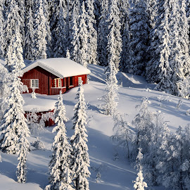 Winter wonderland by Jørgen Schei - Landscapes Forests ( cabin, winter, snow, trees, forest, landscape )
