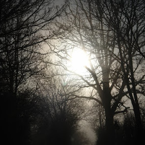 2011 - Winter sun through trees (Classic View) by Ros Dando - Landscapes Forests