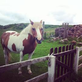 by Benji Murphy - Animals Horses