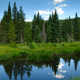 Mountain forest reflecting in deep pond by Beverly Kilzer - Landscapes Forests ( clouds, sky, mountain, pool, grass, blue, green, trees, lake, forest, pine, pond,  )