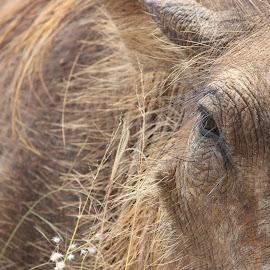 Warthog Emotions by Erina Janse van NIeuwenhuizen - Animals Other ( wild, sa, emotion, warthog, animal )