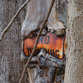 by Lyle Gallup - Artistic Objects Signs ( sign, old, tree, rusty, antique )