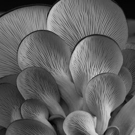 Repetitions and Variations by Tom McCarthy - Nature Up Close Mushrooms & Fungi ( abstract, farm, mushroom, nature, copyright: thomas mccarthy - kinked tree photography, still life, art, agriculture, fungus, kit, crop, geometry,  )