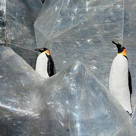 Pingüins by Josep Vallès - Artistic Objects Other Objects ( pingüins, barcelona, catalunya )