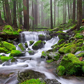 A river runs through it... by Dustin Penman - Landscapes Forests ( olympic, park, national, sol duc, dustin penman )