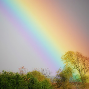 Fairy Tale Rainbow by Kellie Prowse - Landscapes Prairies, Meadows & Fields ( field, colors, landscape, rainbow )