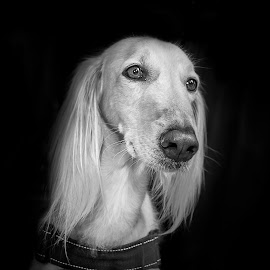 A woman . by An Mark - Animals - Dogs Portraits ( water, grazing, black and white, dog, eyes )
