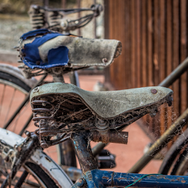 forgotten by Vibeke Friis - Transportation Bicycles ( sadles, old, cromwell, bikes, cobwebs,  )