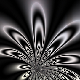 Black & White Flower by Cassy 67 - Illustration Abstract & Patterns ( modern, black and white, wallpaper, fractal art, digital art, fractal, digital, fractals, flower )