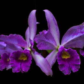 Purple Iris (1 of 1).jpg