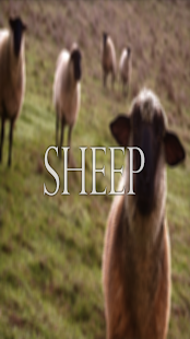 Sheep Wallpaper HD Complete - screenshot