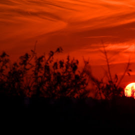South African sunset by Diane Rogers Jones - Novices Only Landscapes