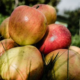 Apple Time! by Nigel Bishton - Nature Up Close Gardens & Produce
