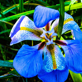 Blue Yellow and White Flower by Jacob Woolwine - Nature Up Close Flowers - 2011-2013 ( pedals, jacob, flower )