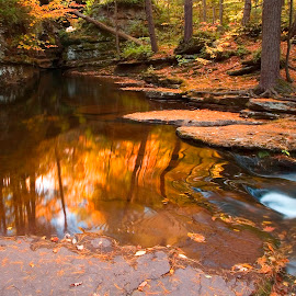 Autumn Reflections Above Adams Falls by Gene Walls - Landscapes Forests ( stream, reflection, spillway, gorge, waterfall, moss, stone, reflections, needles, rock, leaves, landscape, ricketts glen, mirror, nature, autumn, pool, foliage, evergreen trail, creek, sedimentary, chute, red rock, gold, pine, rocks, ricketts glen state park, water, orange, boulders, kitchen creek, forest, adams falls, red, falls, fall, october )