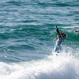 Dive to Success by Matt Dittsworth - Sports & Fitness Watersports ( san diego, blue, surfer, fish, wave, pier, surf, tao )