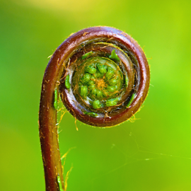 by Keith Sutherland - Nature Up Close Other plants