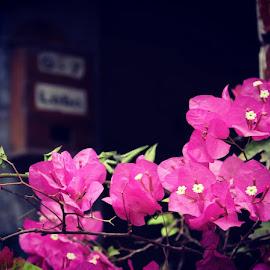 Pink by Rito Brata - City,  Street & Park  Neighborhoods