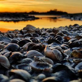 Seashells way by Mariusz Murawski - Nature Up Close Other Natural Objects ( #landscape, #island, #shells, #nature, #lough, #sea, #sky, #sunset,  )