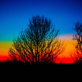 Distinct Horizons  by Alena Purvis - Nature Up Close Trees & Bushes ( bright, colorful, sunset, beautiful, trees, fun, beauty )