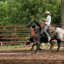 Roping by Linda Brintzenhofe - Sports & Fitness Other Sports ( farm, roping, horse, sport )
