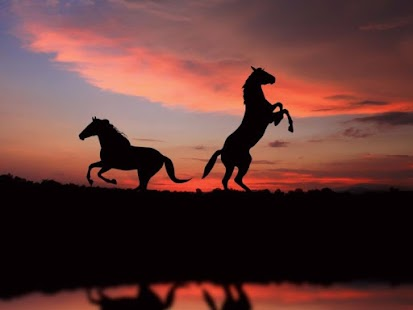 Horse Wallpapers - screenshot