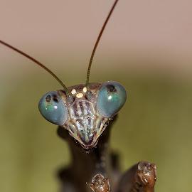 by Jana Vážka - Animals Insects & Spiders
