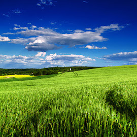 Untitled by Zsolt Zsigmond - Landscapes Prairies, Meadows & Fields ( clouds, field, wheat, hill, may, sky, blue, green, spring )