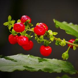 by Nyoman Gita Astadi - Nature Up Close Gardens & Produce (  )