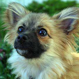 Kahlua in the Garden by Rose Nateren - Animals - Dogs Puppies ( puppies, pets, puppy, cute, dog )