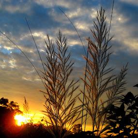 Khashi 1 by Raj Mushahary - Nature Up Close Other plants