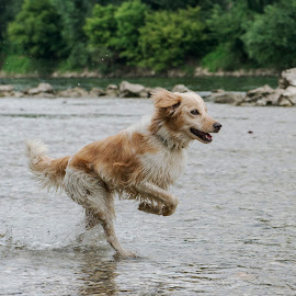 Taking a walk by Dubravka Krickic - Animals - Dogs Running ( water, playing, walking, funny, action, cute, dog, running, river )