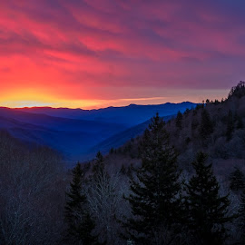 by Tony Cox - Landscapes Sunsets & Sunrises ( smokies )