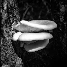 Mushrooms by Dave Lipchen - Black & White Flowers & Plants ( mushrooms )
