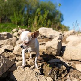 by Radosław Jankowski - Animals - Dogs Portraits