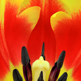 Fire Inside by Hylas Kessler - Nature Up Close Flowers - 2011-2013 (  )