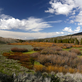 Uinta Meadow by Chris Beck Johnson - Landscapes Prairies, Meadows & Fields