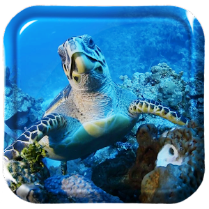Lunch Turtle Live Wallpaper