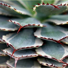 by Lori Rose - Nature Up Close Other plants (  )