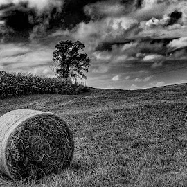 by Jeremy Rose - Black & White Landscapes