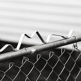 Topping the Gate by Rob Heber - Artistic Objects Other Objects ( natural light, topper, sepia, monochrome, decorative, black and white, still life, sepia toned, pipe, shallow depth of field, chain link gate, metal, no people, chain link fence, closeup, shiny, decoration, scroll, metal gate, chain link, chain link fence gate, close up, gate, open gate, fence, focus on foreground, outdoors, selective focus, outside )