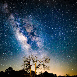 by Judy Rosanno - Landscapes Starscapes ( near enchanted rock state park, texas, night sky, dead tree, milky way )