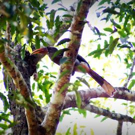 by Shalini Jai - Novices Only Wildlife (  )