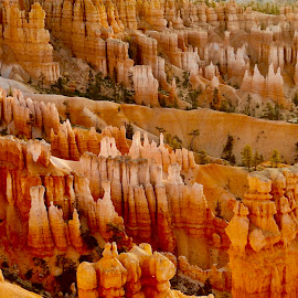 Bryce Canyon Amphitheater by Santford Overton - Landscapes Mountains & Hills ( landscapes, adventure, mountains, places, light, portraits, hills, hoodoos, travel, colors, photography )