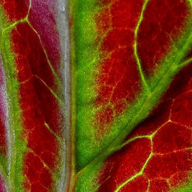 by Francis Xavier Camilleri - Nature Up Close Leaves & Grasses