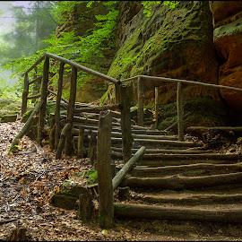 Come into the forest silence by Jana Vondráčková - Landscapes Forests