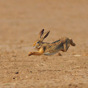 race by Zahoor Salmi - Animals Other Mammals ( animals, nature, wildlife, zahoorsalmi, birds )