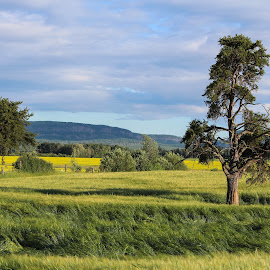 by Tammy Drombolis - Landscapes Prairies, Meadows & Fields